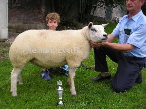Reserve kampioene 1 jarige ooi gezoogd